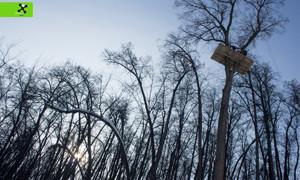 Трейлер для дерева «Гнездо»