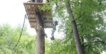 Дерево 25м «Гнездо»